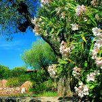 Sardegna LEa di Lavru Residence Esterni 032