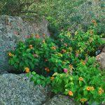 Sardegna LEa di Lavru Residence Esterni 040