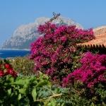 Sardegna LEa di Lavru Residence Esterni 003