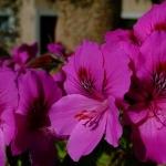 Sardegna LEa di Lavru Residence Esterni 007