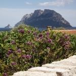 Sardegna LEa di Lavru Residence Esterni 072